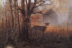 image - homestead buck by Don Kloetzke